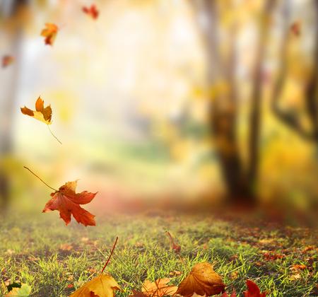 leuchtend: Fallenden Blätter im Herbst Hintergrund