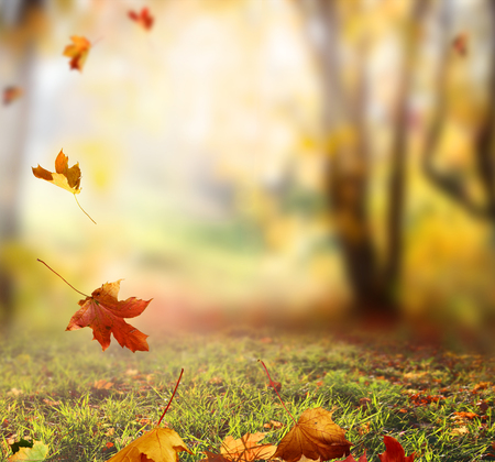 scenic landscapes: Falling Autumn Leaves background Stock Photo