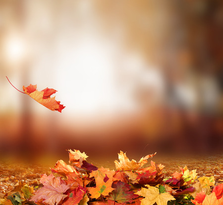 Falling Autumn Leaves background Foto de archivo