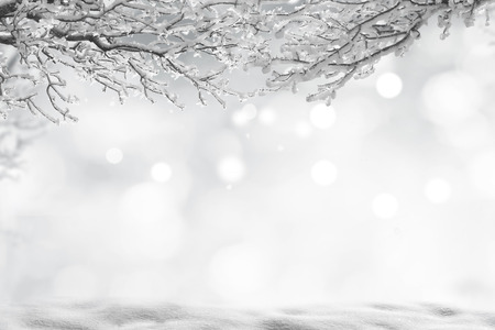 winter christmas background 写真素材