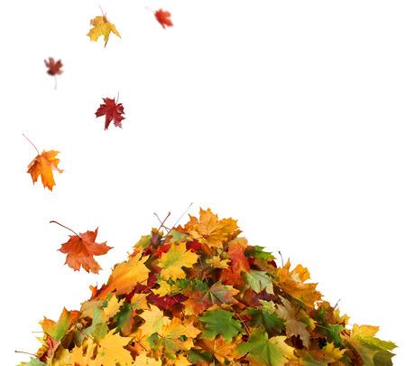 가을 잎 더미