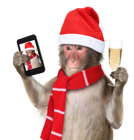 Funny monkey with christmas santa hat taking a selfie and smiling at camera 스톡 콘텐츠
