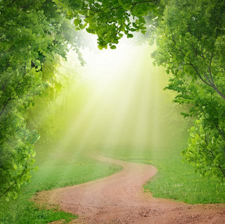Forêt de source magique