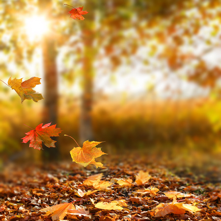 Beautiful autumn landscape with yellow trees and sun. Colorful foliage in the park. Falling  leaves natural background .Autumn season concept Imagens