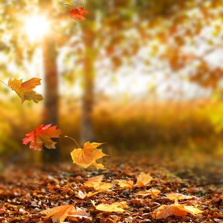 Mooie herfst landschap met gele bomen en zon. Kleurrijke bladeren in het park. Vallende bladeren natuurlijke achtergrond dress.Autumn seizoen begrip