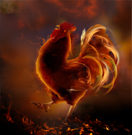 Fire rooster.Symbol of  new year 2017.Chinese zodiac  year of rooster