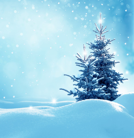 Christmas winter background with fir tree and blurred bokeh