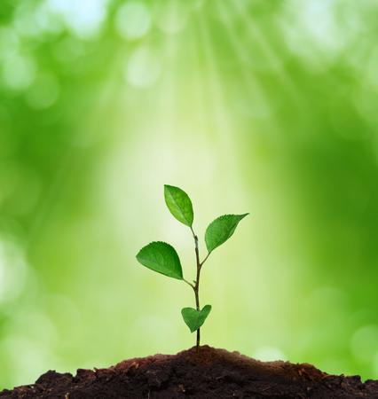 erde: Neues life.Environment concept.Sprout im grünen Hintergrund. Lizenzfreie Bilder