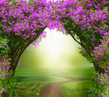 Fantasy background. Magic forest with road.Beautiful spring landscape.Lilac trees in blossom Imagens