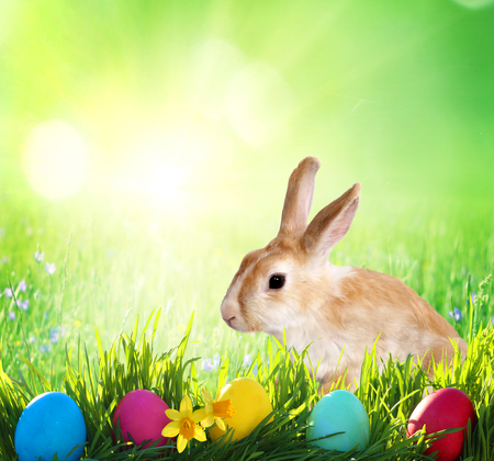 Easter background. Cute Little bunny and Easter eggs on green grass  Stock Photo