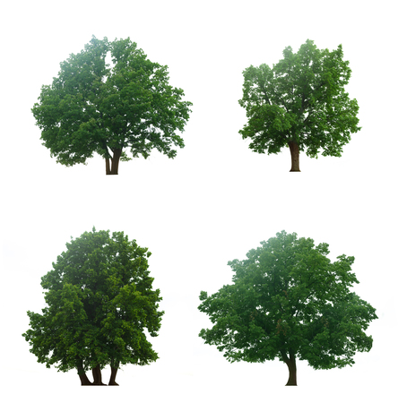 isolation white: Beautiful four green trees isolated on a white background