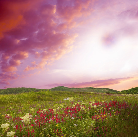 Beautiful landscape with flowers.Pink sunset is in the flower field