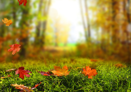 Beautiful autumn landscape with yellow trees, green and sun. Colorful foliage in the park. Falling leaves natural background Stock Photo - 110084978