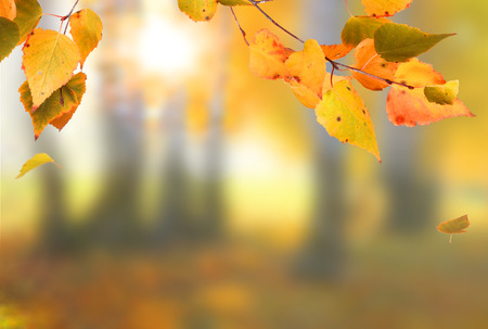 Beautiful autumn landscape with yellow trees, green and sun. Colorful foliage in the park. Falling leaves natural background Stock Photo - 110084979