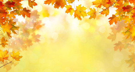 Autumn background with maple leaves Stock Photo - 110084990