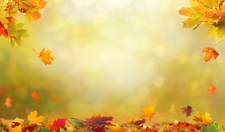Autumn maple leaves on wooden  table. Falling leaves natural background. Stock Photo