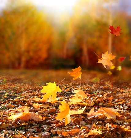 Beautiful autumn landscape with yellow trees and sun. Colorful foliage in the park. Falling  leaves natural background. Autumn season concept