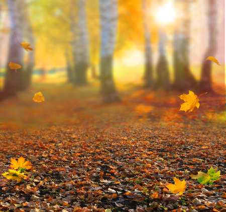 Beautiful autumn landscape with yellow trees, green and sun. Colorful foliage in the park. Falling leaves natural background Stock Photo