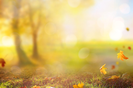 Beautiful landscape with yellow trees, green grass and sun. Colorful foliage in the park. Falling leaves natural background . Stock Photo