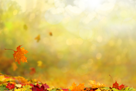 Beautiful autumn landscape. Colorful foliage in the park. Falling leaves natural background.