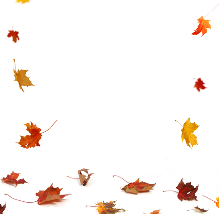Autumn falling maple leaves isolated on white background Stock Photo - 110085089