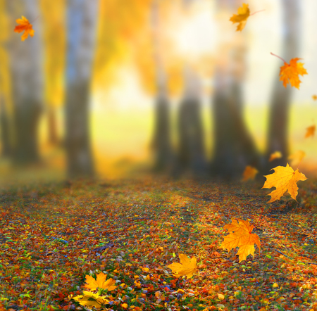 Beautiful autumn landscape with yellow trees, green and sun. Colorful foliage in the park. Falling leaves natural background 스톡 콘텐츠