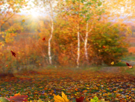 Autumn maple leaves. Beautiful autumn landscape with colorful foliage. Falling leaves natural background