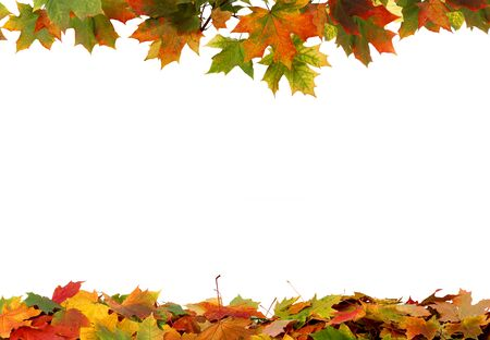 Autumn colored falling maple leaves isolated on white background