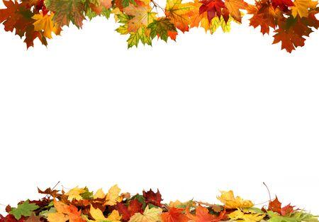 Geïsoleerde herfstbladeren Stockfoto