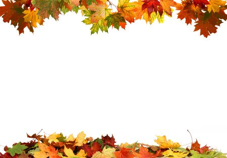Isolated autumn leaves Reklamní fotografie