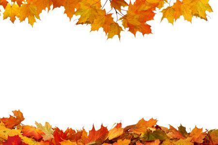 Herbstfarbene fallende Ahornblätter isoliert auf weißem Hintergrund