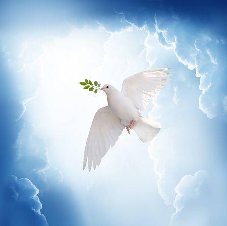Een vrije witte duif die een groene bladtak vasthoudt die in de lucht vliegt. Internationale dag van vrede concept achtergrond Stockfoto