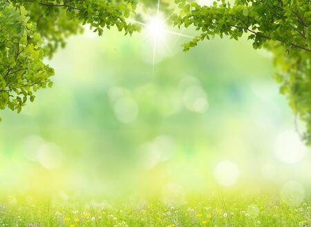 Fondo de naturaleza. Prado de primavera con hojas verdes.