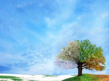 Four season tree.Winter, autumn, spring, summer