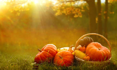 Autumn background with pumpkins on green grass.Harvest or Thanksgiving background Banco de Imagens