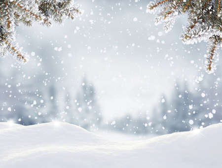 Snowfall in winter forest.Beautiful landscape with snow covered fir trees and snowdrifts.Merry Christmas and happy New Year greeting background with copy-space.Winter fairytale. Banco de Imagens