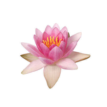 Beautiful pink water lily isolated on white Banco de Imagens
