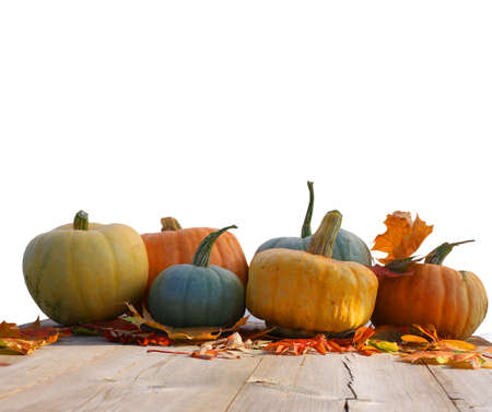 Pumpkins and maple leaves isolated on white background.Harvest or Thanksgiving table Banco de Imagens