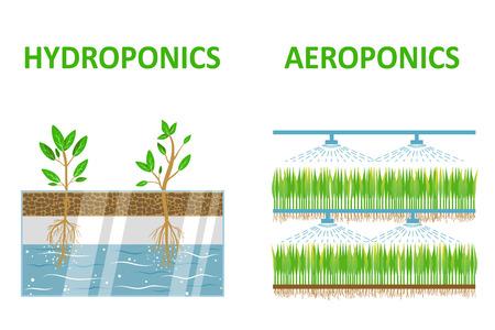 Aeroponische und hydroponische Systeme. Farbige flache Vektor-Illustration Standard-Bild - 60872674