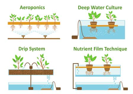 Zestaw aeroponicznych i hydroponicznych systemów wzrostu roślin.