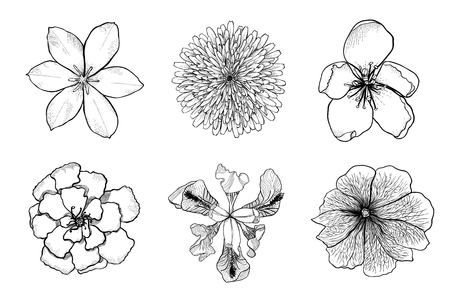 Set of black and white silhouettes of flowers. Top view of detailed hand drawn design elements. Monochrome doodle vector illustration isolated on white background