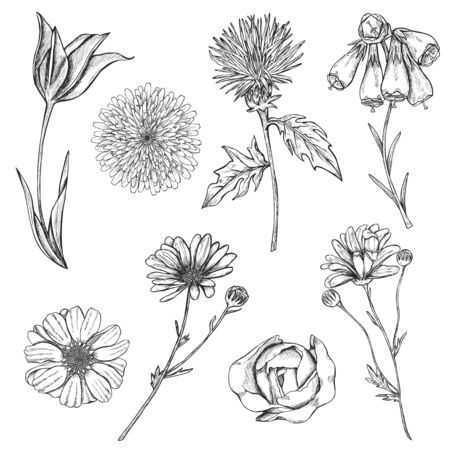 Set of hand drawn sketch flowers with stems and top view. Monochrome design elements of rose, chrysanthemum, tulip etc. Illustration isolated on white background