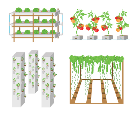 Set of hydroponic plant growth systems. Vegetables and grass growing in nutrient flow systems with water in greenhouse without soil. Color vector illustration. Modern biotechnology Illustration
