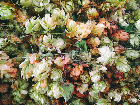 Top view of dried or fresh flowers and leaves. Vintage background with summer, spring or autumn plants