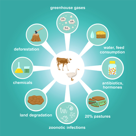 Infographic of industrial factory farming and environmental pollution (deforestation, land degradations, greenhouse gases, etc.). Harmful chemicals, antibiotics in animal husbandry. Color vector illustration