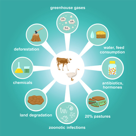 Infographic of industrial factory farming and environmental pollution (deforestation, land degradations, greenhouse gases, etc.). Harmful chemicals, antibiotics in animal husbandry. Color illustration