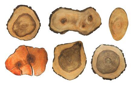 Gruppo di ceppi di albero ruvidi tagliati isolati su bianco. Sfondo naturale