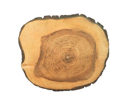 Cross section of tree trunk isolated on white. Rough stump shape Imagens