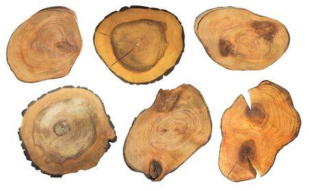 Set di tronchi d'albero tagliati isolati su bianco. Forme di monconi ruvide