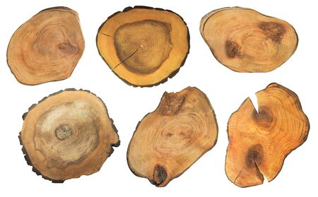 Set of cut tree trunks isolated on white. Rough stump shapes
